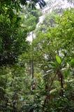 更多树和密林植物新加坡植物园的 图库摄影