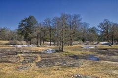 更多雪、岩石和树 免版税库存图片