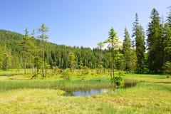 更总的Arbersee在国立公园巴法力亚森林德国里 免版税库存照片