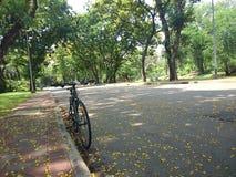 曼谷泰国- 2015年4月:在Lumpini公园的特写镜头自行车2015年4月11日在曼谷泰国 免版税库存照片