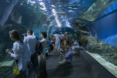 曼谷泰国2014年12月4日-在泰国ocea的水下的世界 免版税图库摄影