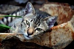 曼谷猫困泰国 库存图片
