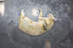 曼谷街道猫 免版税库存图片
