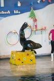 曼谷,泰国, 2018年2月13日,海狮与动物t的展示立场 库存照片