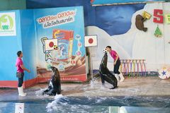 曼谷,泰国, 2018年2月13日,海狮展示戏剧球与取暖 库存图片