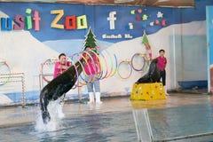 曼谷,泰国, 2018年2月13日,海狮展示跃迁从水 免版税库存照片