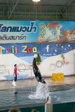 曼谷,泰国, 2018年2月13日,海狮展示跃迁从水 库存图片
