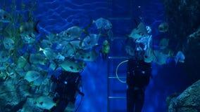 曼谷,泰国- 2018年12月18日在水族馆的潜水者哺养的鱼 匿名人用潜水者设备哺养 股票视频