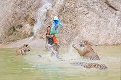 曼谷,泰国- 2014年2月:有老虎寺庙的人们 图库摄影