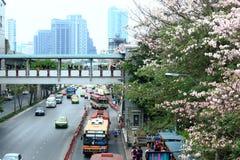 曼谷,泰国- 2016年4月16日:开花在Jatujak路旁的桃红色喇叭花 免版税图库摄影