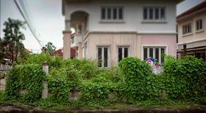 曼谷,泰国- 10月13 :植物在附近长满 免版税库存图片