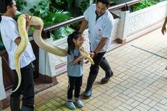 曼谷/泰国- 2018年5月11日:孩子有蛇展示的和显示对游人在Serpentarium,泰国红十字会社会 库存照片
