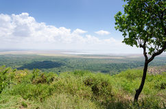 曼雅拉湖,坦桑尼亚 免版税库存照片