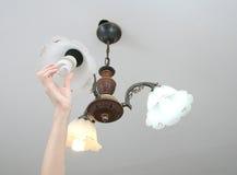 替换盛开的电灯泡的光  库存图片