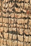 最佳的接近的细节棕榈树吠声纹理样式背景 图库摄影