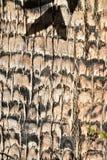 最佳的接近的细节棕榈树吠声纹理样式背景 库存照片
