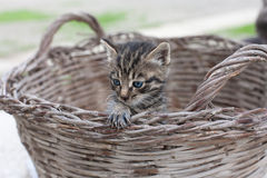 最佳的猫 免版税库存照片