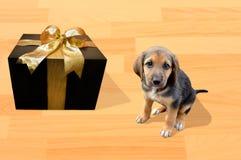 最佳的礼物是我的小狗 库存图片