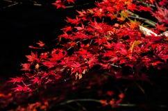 最佳的秋天在日本 免版税库存照片