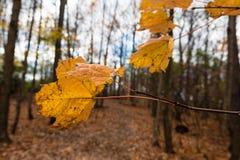 最后叶子,秋天的结尾 免版税库存照片