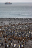 最大的企鹅国王殖民地,南乔治亚 库存照片