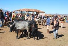 最大的封牛市场在马达加斯加,非洲 库存图片