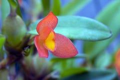 最大的植物的家庭的兰花一的种类 库存图片