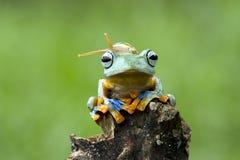 最好的朋友青蛙和蜗牛 免版税库存照片