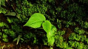 最小的叶子 免版税库存照片