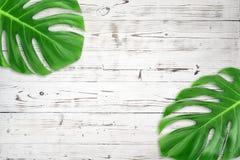 最小的构成舱内甲板被放置的绿色热带叶子 创造性的布局回归线留给框架拷贝空间在白色木背景 免版税图库摄影