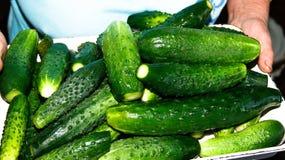 最自然的唯一的收集的年轻绿色黄瓜在妇女的手上 免版税库存照片