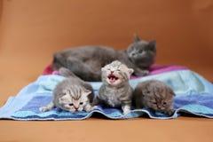 最近出生的小猫,第一天 免版税图库摄影