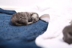 最近出生的小猫 库存图片