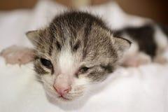 最近出生的Cutie 免版税库存照片