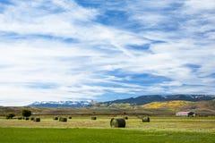 最近在农田的被收获的干草捆在科罗拉多 免版税图库摄影