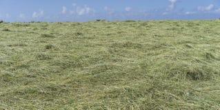 最近被割的干草领域在一个明亮的晴天 免版税图库摄影