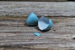 最近被孵化的罗宾鸡蛋 免版税库存照片