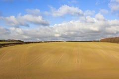 最近被播种的麦子庄稼 免版税图库摄影