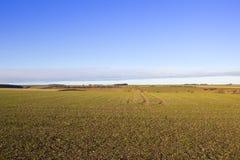 最近被种植的麦子庄稼 库存图片