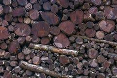 最近击倒的木材 栈木头 库存照片