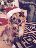 最逗人喜爱的圣诞老人 免版税图库摄影