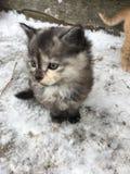 最逗人喜爱的小猫在世界上 图库摄影