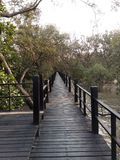 最长的木桥梁在mangroove森林里 库存照片