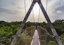 最长的机盖走道在非洲如被看见在Lekki保护中心在Lekki,拉各斯尼日利亚 库存照片