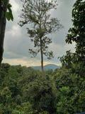 最高的结构树 免版税库存照片