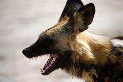 最终非洲的猎人 免版税库存照片
