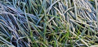 11月一日在植物的霜 免版税库存照片