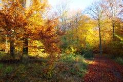 11月上色了森林 免版税库存图片