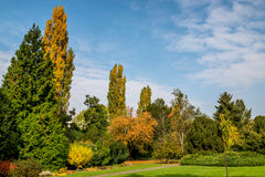 10月下旬在布拉索夫植物园,公园草甸里 库存图片