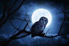 满月专心地照亮的猫头鹰手表在万圣夜夜上 免版税库存照片